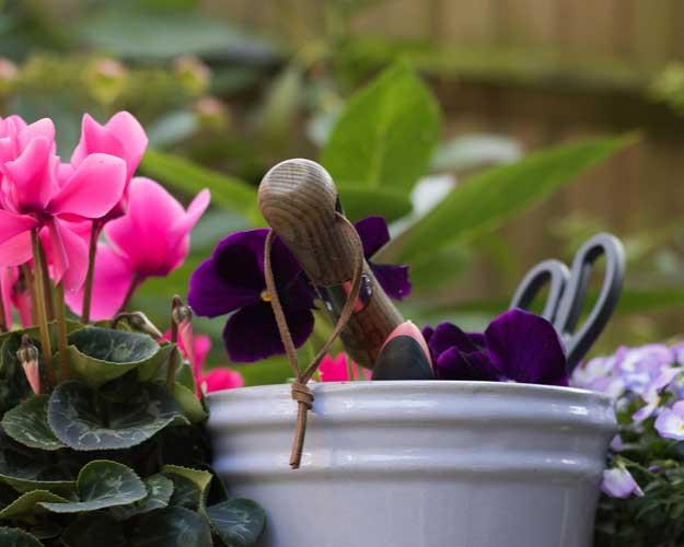 Samen saatgut online kaufen garten shop - Gartenarbeiten im mai ...