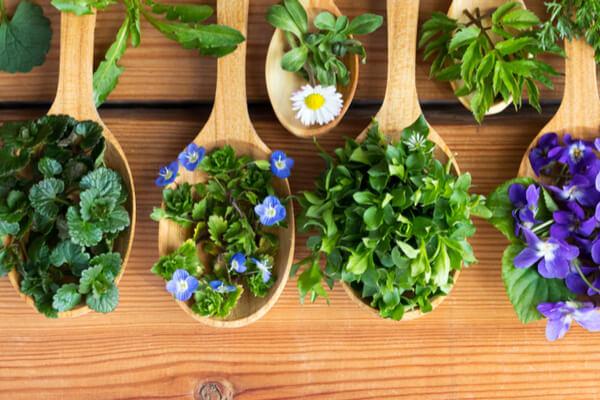 Atemberaubend Essbare Wildpflanzen - wahre Geschmackswunder | Saemereien.ch #RU_11
