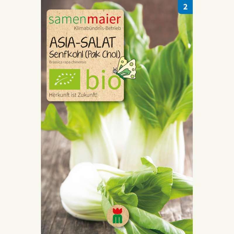 samen saatgut asia salat senfkohl 39 pak choi 39 brassica. Black Bedroom Furniture Sets. Home Design Ideas