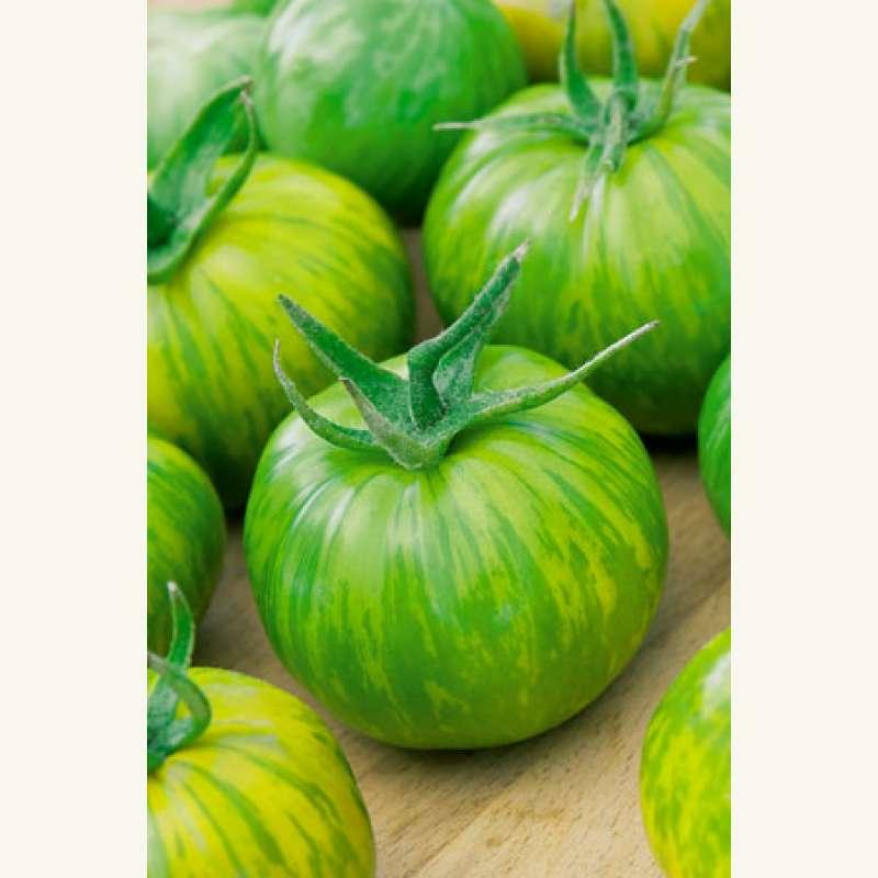 samen saatgut tomate 39 green zebra 39. Black Bedroom Furniture Sets. Home Design Ideas