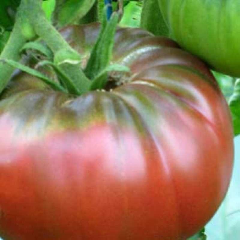 samen saatgut tomate 39 lilac 39 lycopersicon esculentum. Black Bedroom Furniture Sets. Home Design Ideas