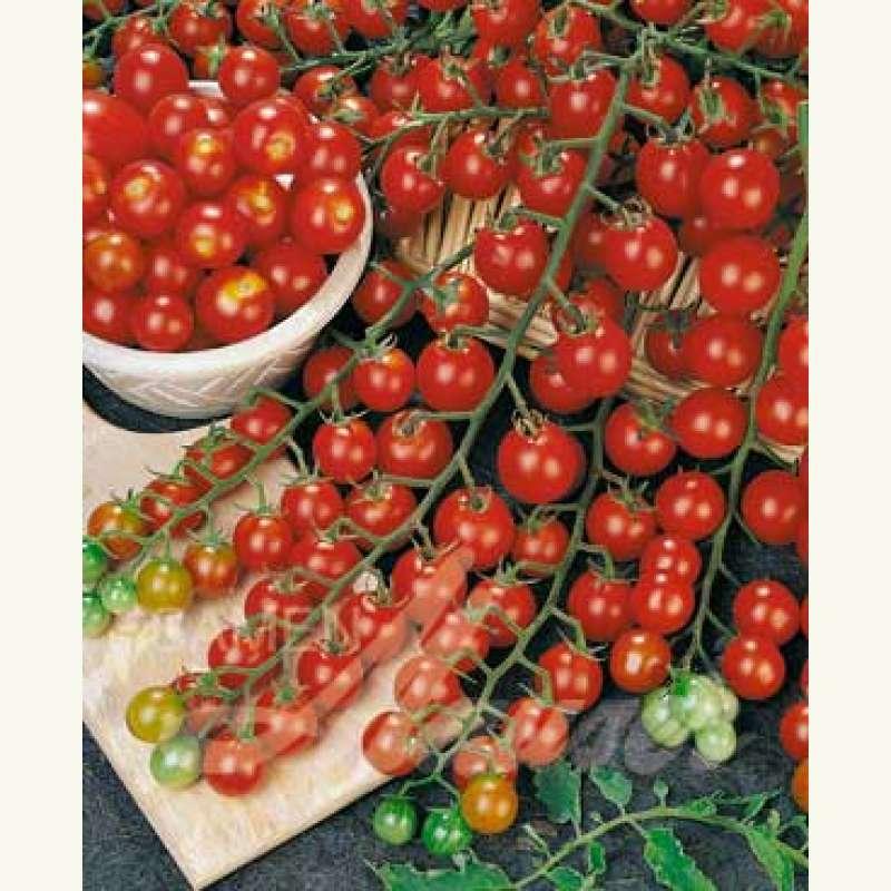 samen saatgut tomate 39 sun cherry f1 39. Black Bedroom Furniture Sets. Home Design Ideas