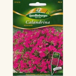 samen saatgut calandrina 39 amaranth 39 calandrinia grandiflora 5 30. Black Bedroom Furniture Sets. Home Design Ideas