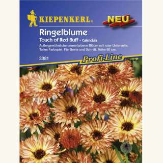 Ringelblume Touch of Red Buff - Calendula officinalis -...