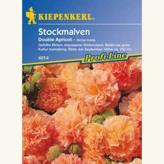 Malve, Stockrose Chaters Double Apricot, Mischung - Alcea...