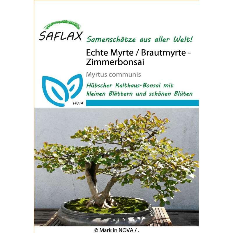 Echte Myrte / Brautmyrte, Myrtus communis, 4.90 CHF
