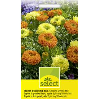 Studentenblume, Sammetblume Spinning Wheels Mix - Tagetes...