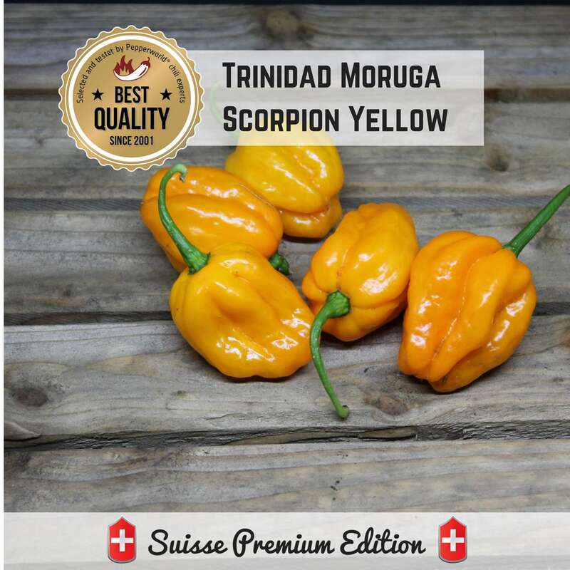 Chili Trinidad Moruga Scorpion Yellow - Capsicum chinense - Samen