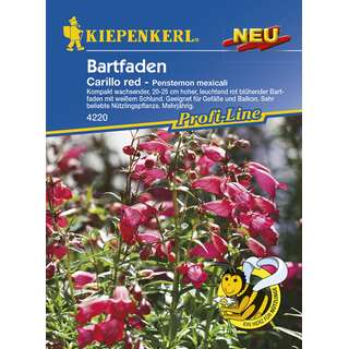 Bartfaden Carillo red PROFILINE - Pestemon mexicali - Samen