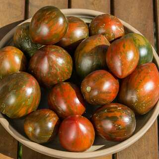Tomate Black and Brown Boar - Solanum Lycopersicum -...
