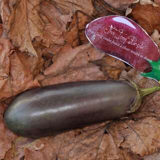 Aubergine, Eierfrucht Thai Long Purple - Solanum...