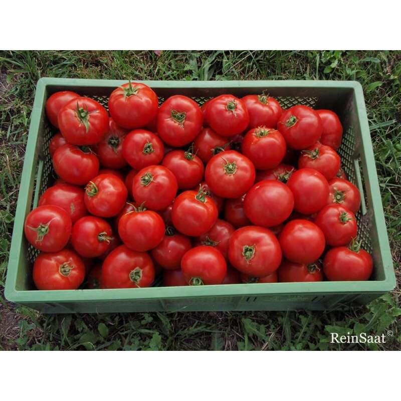 Kiepenkerl Saatgut Tomate Saint Pierrè