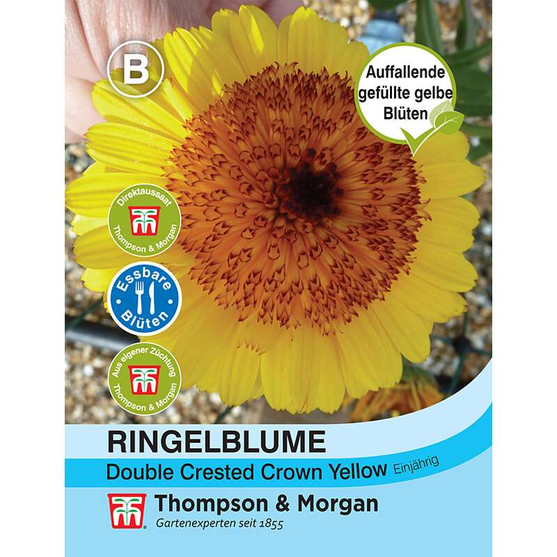 Ringelblume Double Crested Crown Yellow - Calendula officinalis - Samen