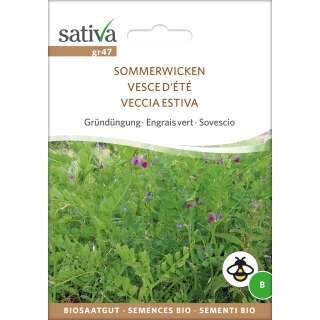 Vicia Sativa  Sommerwicke Sommer Wicke 500 Samen