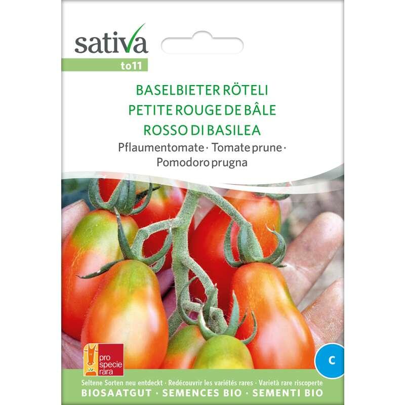 Tanger Pea Lathyrus tingitanus Magenta pois de senteur fleurs RARE 10 Organic seeds