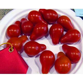 Tomate Red Pear - Rote Birne - Lycopersicon esculentum -...