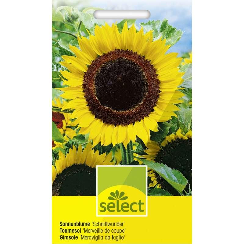 Samen Saatgut Sonnenblume Schnittwunder 2 65