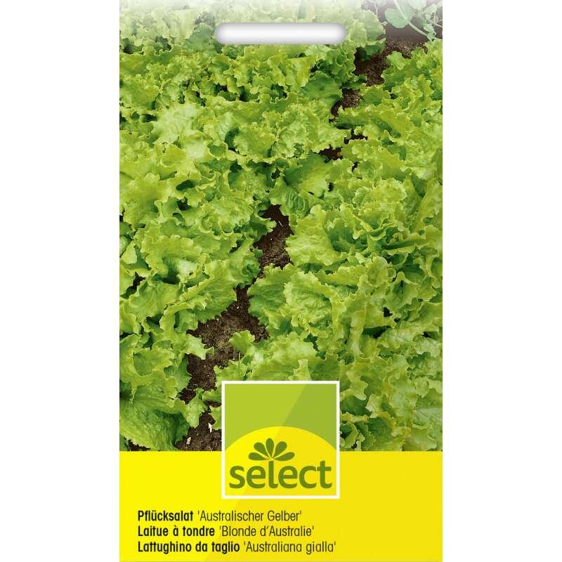 gelber oleander kaufen gelber oleander mezzo gelbe bl ten treffpunkt stammtisch green24. Black Bedroom Furniture Sets. Home Design Ideas