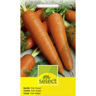 Carrot Karotte 25+ Samen Saatgut FEIN und KNACKIG! Möhre Royal Chantenay