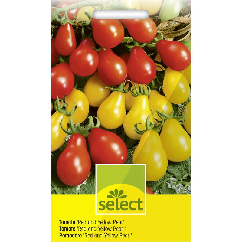 Tomate, Cherry Red Pear Yellow Pearshaped - Lycopersicon esculentum - Tomatensamen
