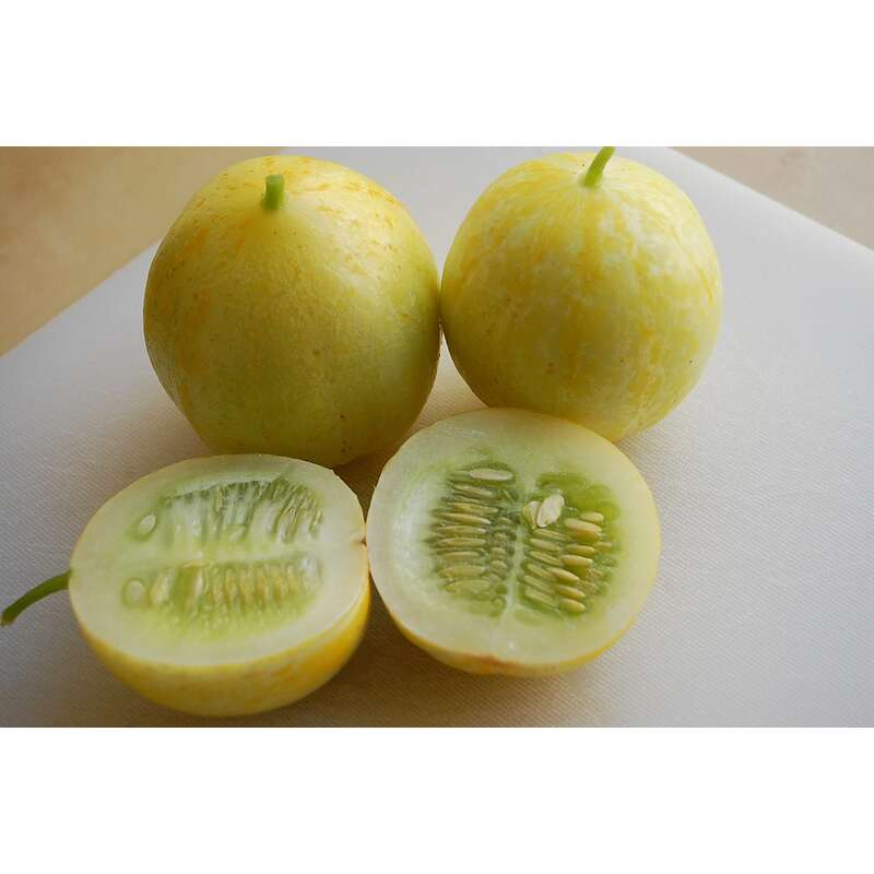Gurke True Lemon- Cucumis sativus - Samen
