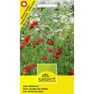 Wildblumenmischung Acker Wildblumen - Diverse species -...