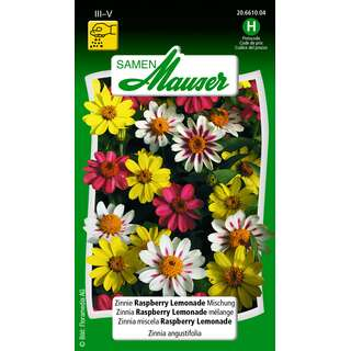 Zinnie Rasberry Lemonade Mix - Zinnia elegans - Samen