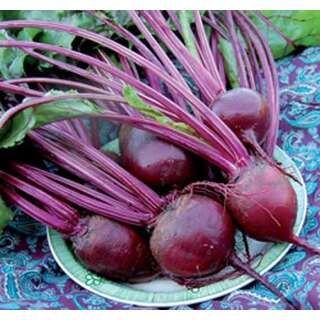 Rande, Rote Bete Detroit Dark Red - Beta vulgaris var....