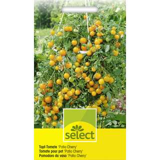 Topf Tomate Patio Cherry gelb - Lycopersicon esculentum -...