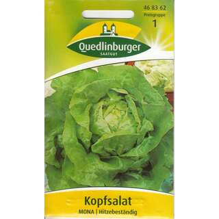 "100   Samen Gemüse schossfest Kopfsalat /""Pirat/"" Sommeranbau Salat ca"