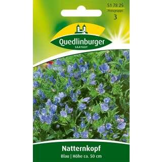 samen saatgut natternkopf 39 blau 39 echium plantagineum 3 20. Black Bedroom Furniture Sets. Home Design Ideas