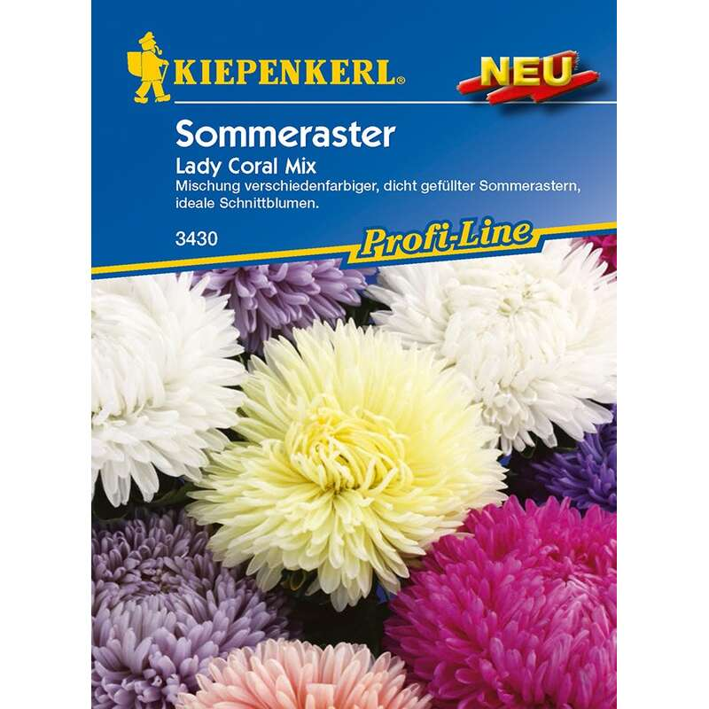 Aster, Sommeraster Lady Coral Mix PROFILINE - Callistephus chinensis - Samen