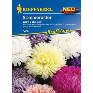 Aster, Sommeraster Lady Coral Mix PROFILINE -...