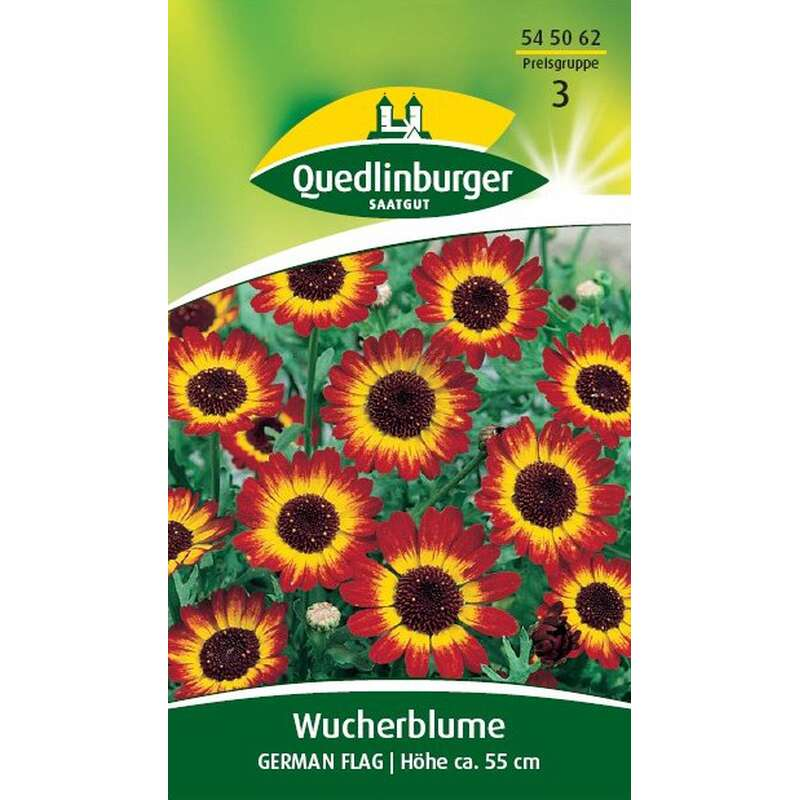 Wucherblume German Flag - Chrysanthemum segetum - Samen