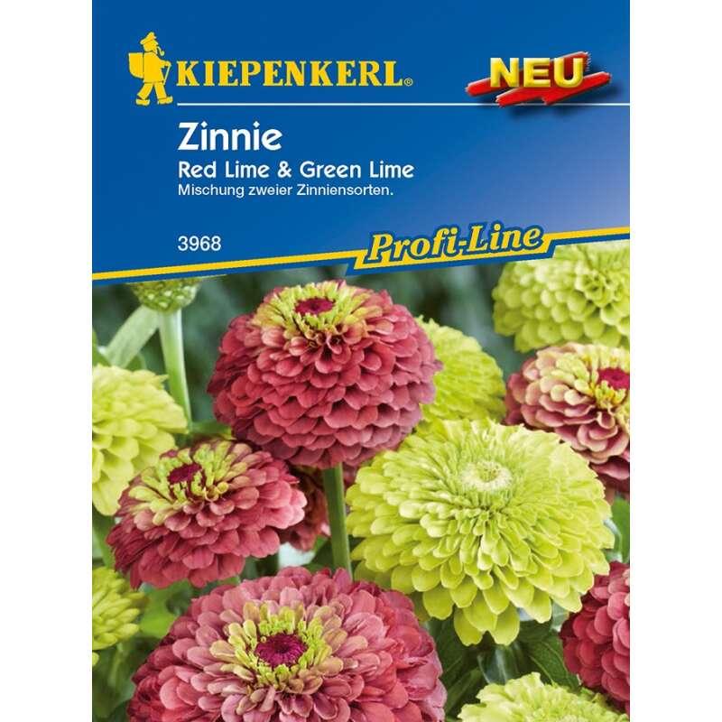 Zinnia elegans 150 Samen Giant Red Zinnie