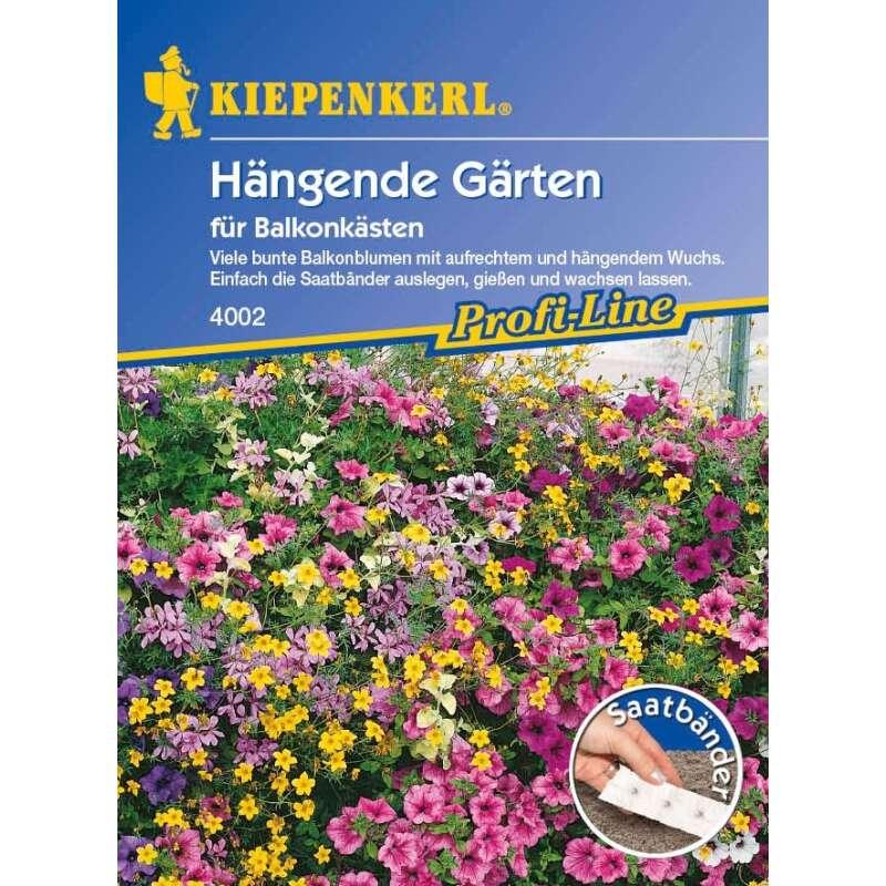 Schnittblumen Sommerblumen Samen Mischung vieler Sorten TROCKENBLUMEN