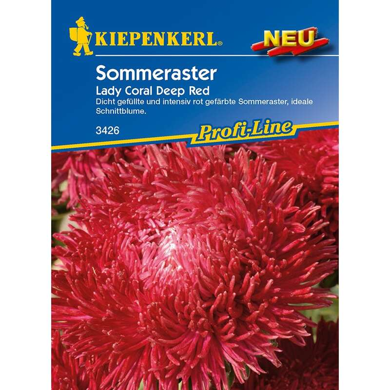 Aster, Sommeraster Lady Coral Deep Red PROFILINE - Callistephus chinensis - Samen