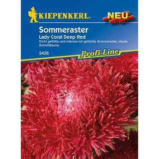 Aster, Sommeraster Lady Coral Deep Red PROFILINE -...