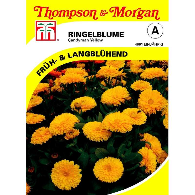 samen saatgut ringelblume 39 candyman yellow 39 calendula. Black Bedroom Furniture Sets. Home Design Ideas
