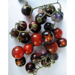 Tomate Indigo Blue Berries - Lycopersicon esculentum -...