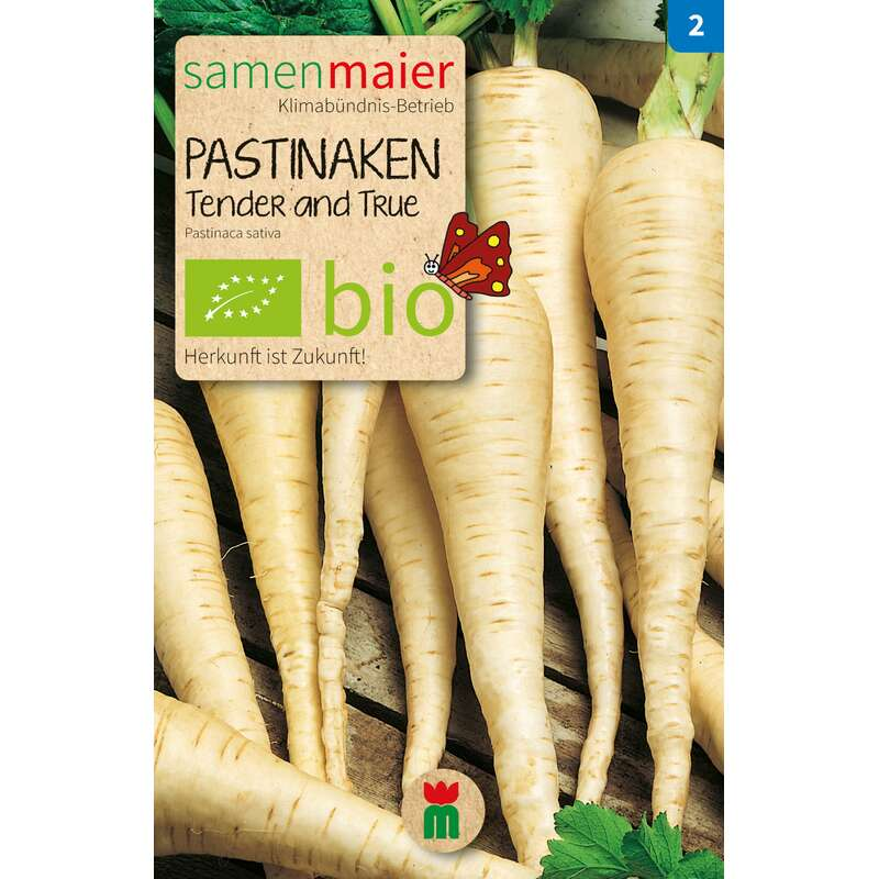Pastinake Tender and True -  Pastinaca sativa - BIOSAMEN