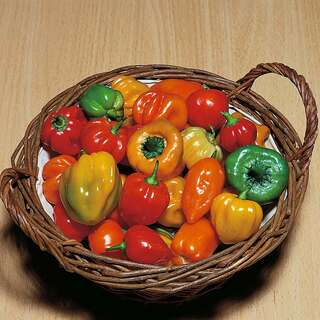 Chili Tropical Heat - Capsicum chinense - Samen