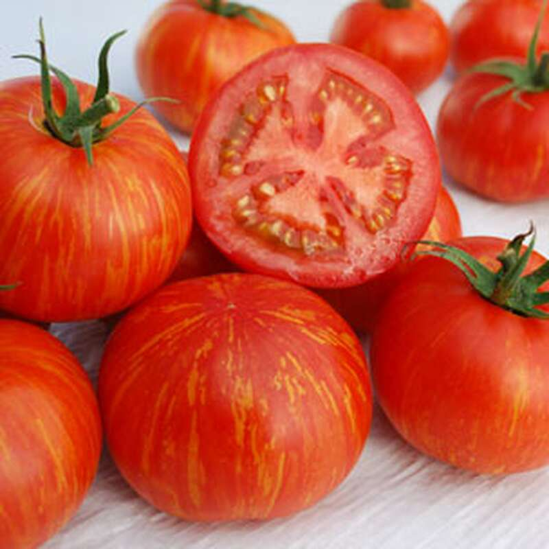 Striped roman tomatensamen